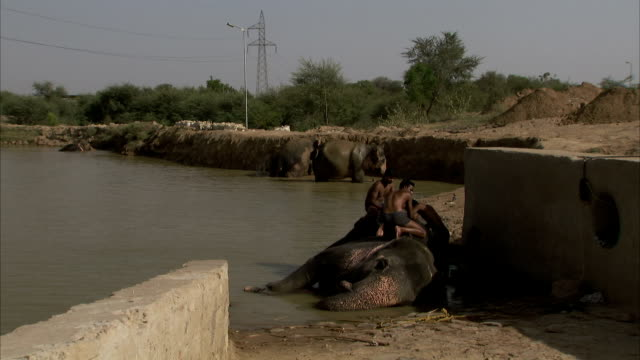 Mahouts wash an elephant. Available in HD