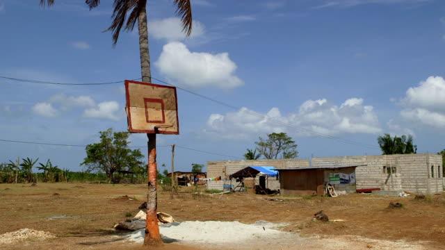 A makeshift basketball hoop on a palm tree