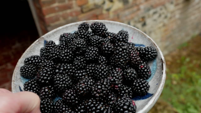 Making a blackberry clafoutis: picking blackberries