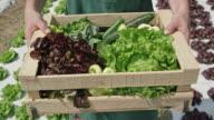 Männlichen Bauern tragen eine Holzkiste mit produzieren entlang der Salatfeld