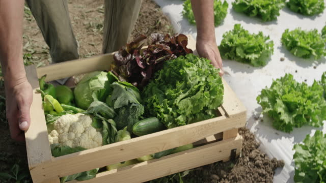 Male farmer picking up a wooden crate with vegetables off the ground