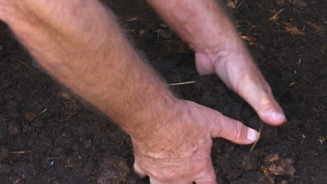 Male hands in rich soil.