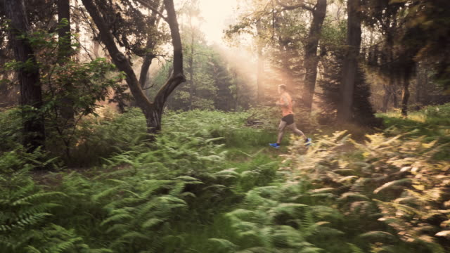 AERIAL Male runner running through forest in the morning