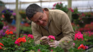 Male worker checking a flower plants at the garden center