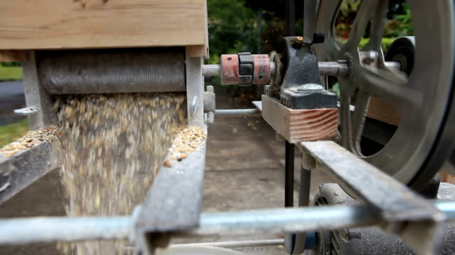 Malted Barley being crushed in a grain mill