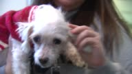 Maltese dogs at PAWS In Chicago