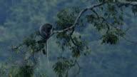 Mammals wildlife