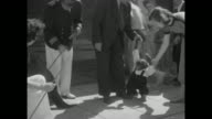 Man and woman holding hands with chimpanzee standing next to them man in nautical outfit holding sea lion on leash people watching / two shots of...