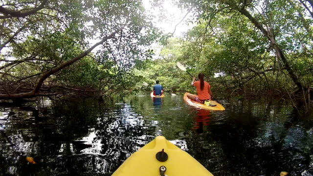POV of man and woman kayaking under lush mangrove forest along ocean coast.