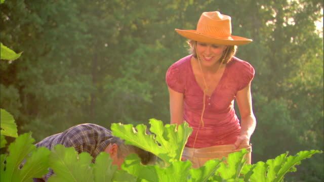 Man and woman picking cucumbers in garden