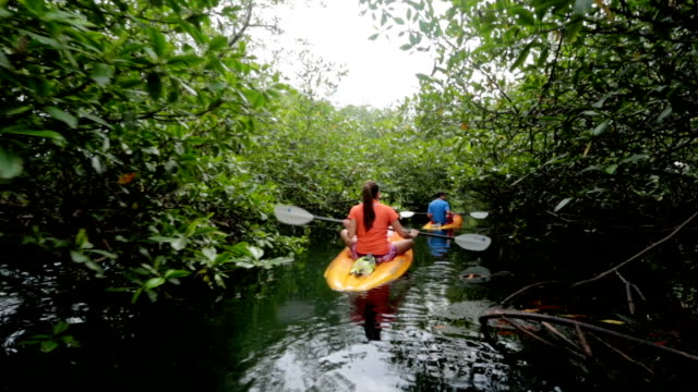 Man and woman sea kayaking in under lush green mangrove forest on ocean coast.