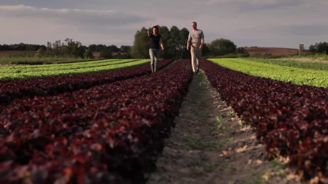 WS TU Man and woman walking through row of lettuce / Brodowin, Brandenburg, Germany