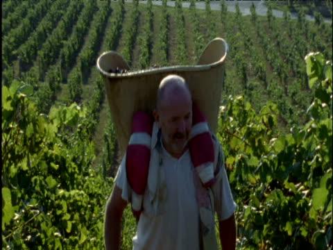 Man carries grapes through vineyard France