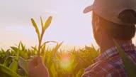 Frau Mann Überprüfung der Mais Pflanzen