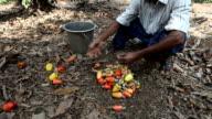 Man cleans cashews.