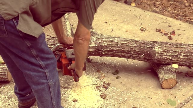 Man cuts down tree then saws it up into fireplace logs.