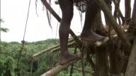 Man descends wooden tower during land diving ritual, Pentecost, Vanuatu