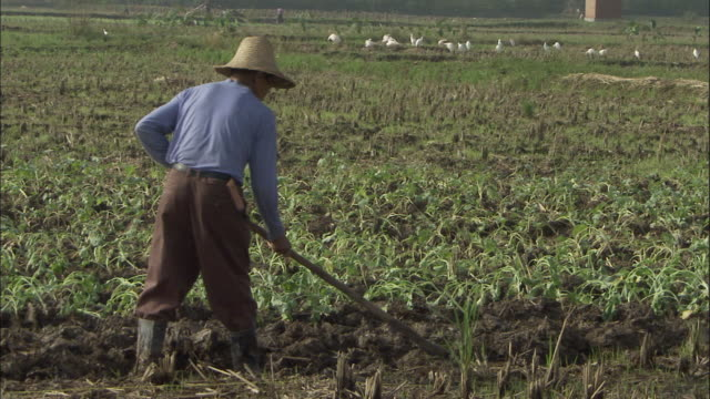 Man digs in field with mattock, Quinling, China.