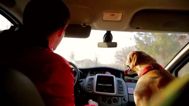 A man enjoys the ride home as much as his dog does!