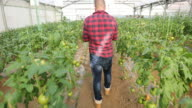 Man in a organic farm