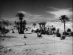 Man in Arabian dress riding horse quickly through desert valley studded with palm trees Arab Horseman in Desert on January 01 1956 in Unspecified