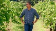 MS, Man in vineyard, portrait, Marlboro, New York State, USA