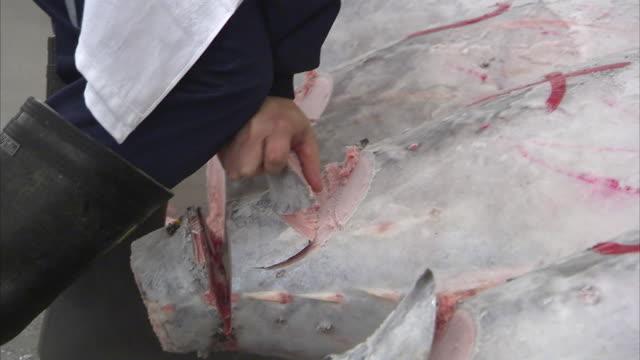 CU Man inspecting frozen tuna fish, Tsukiji fish market, Tokyo, Japan
