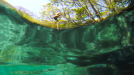 Man jumps to the water with a liana. Low underwater point of view. Natural swimming pool of Ojo de Agua. Ometepe, Nicaragua.