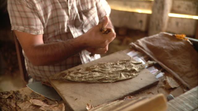 CU PAN Man making cigar with tobacco leaves / San Luis, Pinar del Rio, Cuba