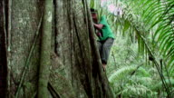 Man of the tribe of Mosetenes climbing a tree called 'mapajo' Bolivia, Amazon