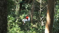man on a zip line through the trees