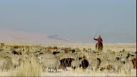 WS PAN Man on horse herding sheep, Khustain Nuruu National Park, Tov Province, Mongolia