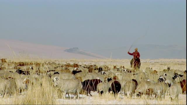 WS PAN Man on horse herding sheep, Khustain Nuruu National Park, Tov Province, Mongolia