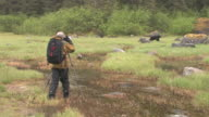 WS, Man photographing American Black Bear (Ursus americanus) in grassy field, Glacier Bay National Park and Preserve, Alaska, USA