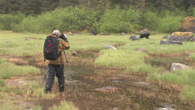 WS, Man photographing American Black Bear (Ursus americanus) in grassy field, Glacier Bay National Park and Preserve, Alaska, USA