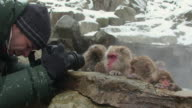 CU Man photographing Japanese Macaques (Macaca fuscata) sitting in hot spring / Jigokudani, Nagano prefecture, Japan