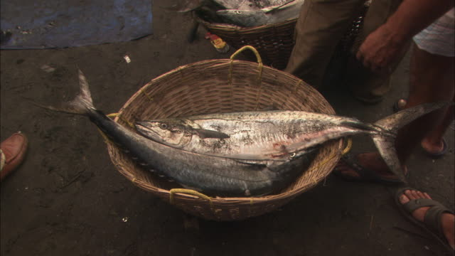Man places large fish in wicker basket at busy fish market Available in HD.