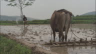 Man scatters white substance in paddy field, Qinling, China