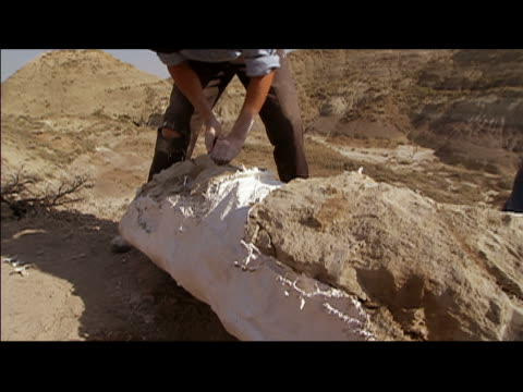 Man scraping plaster off cast of dinosaur bone at excavation site in Hell Creek Formation / Montana