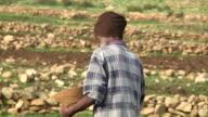 Man sowing seeds at plantation