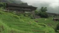 Man tends to crops on Dragon's Backbone rice terraces, Guilin, Guangxi Zhuang