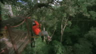 Man travels along zip line through treetops, Tsitsikamma National Park. Available in HD.