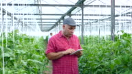 4K Man using digital tablet in greenhouse