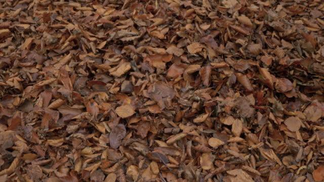 man walking through autumnal leaf