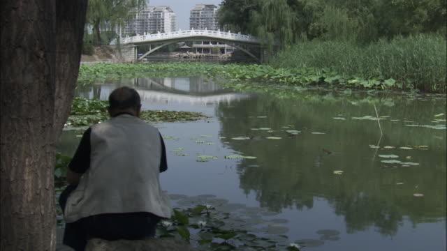 Man watches mandarin duck and ducklings swim through water lilies, Beijing