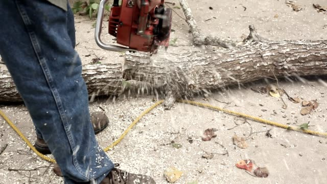 Man with chainsaw cutting up tree trunk.