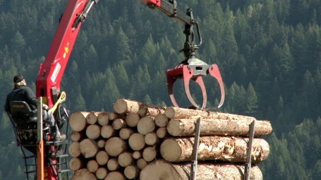 Man working with crane lifting logs