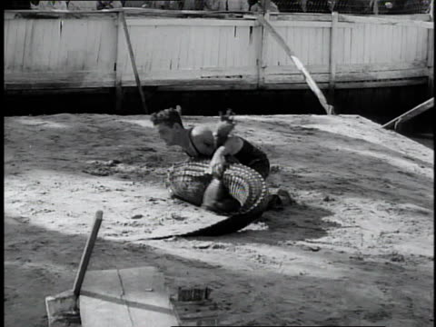 1930 WS Man wrestling alligator and flipping it onto its back in sideshow arena / Miami, Florida