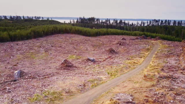 Managed Forest in Grays Harbor County - Aerial Shot