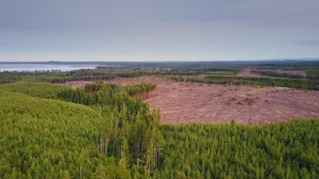 Managed Forest on Washington Coastline - Aerial